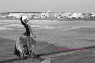 Kure Beach Pier 2012